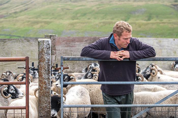 Opinion Farmer With Sheep Alamy
