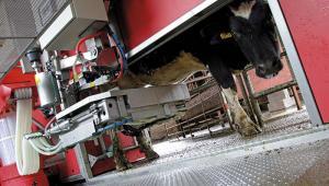Milking Machine Alamy