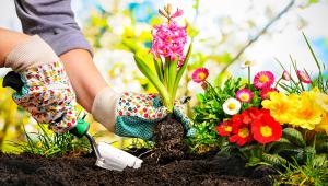 Gardening SHUTTERSTOCK