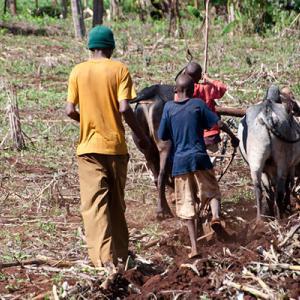 Farming Africa: Developing world