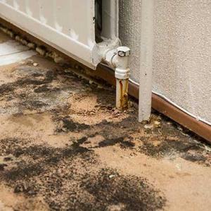 Mold poor standard property